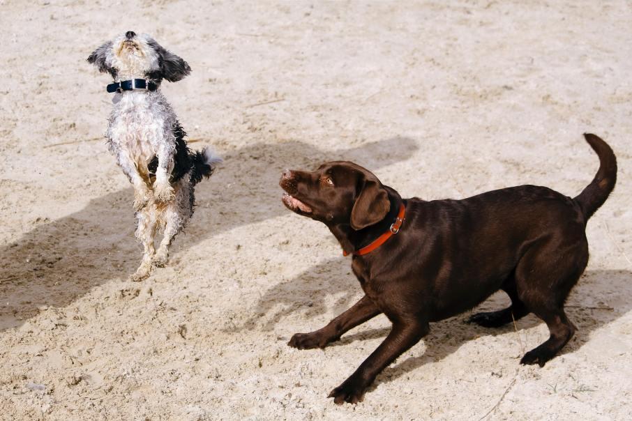 cute-dogs-998254